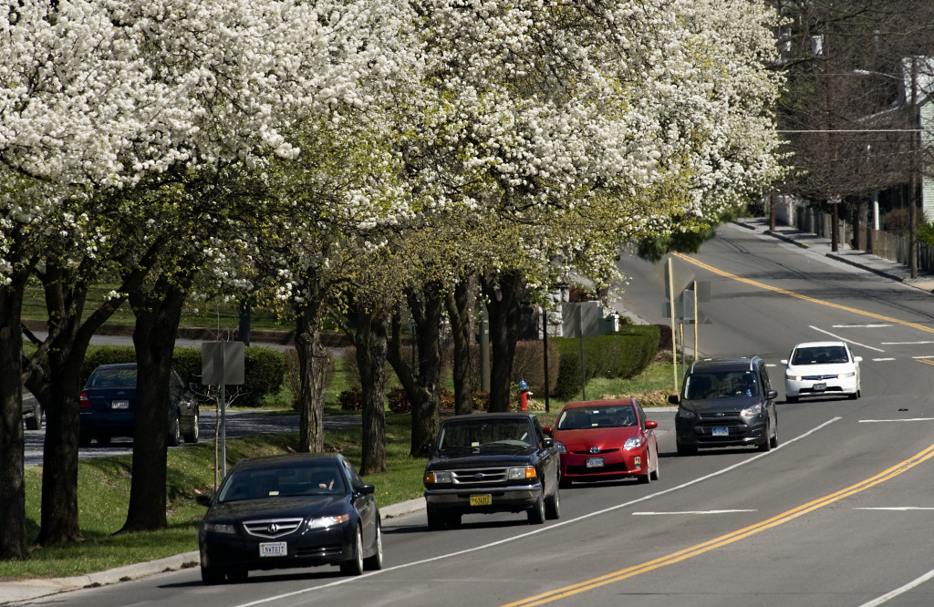 Cars move along South Main Street in Woodstock under a canopy of Bradford pear trees near Benchoff Drive on a spring afternoon. The leaves are starting to appear among the buds.  Rich Cooley/Daily