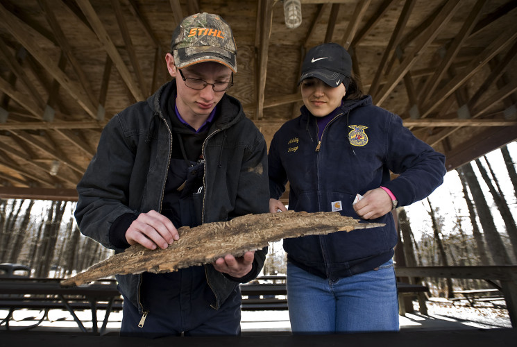 Strasburg FFA students Ethan Gochenour, 16, left, and Ashley Yanego, 17, had to identify the pest (the emerald ash borer) that left residual damage to a piece of bark during the Envirothon held at Sherando Park in Frederick County on Wednesday.    Rich Cooley/Daily