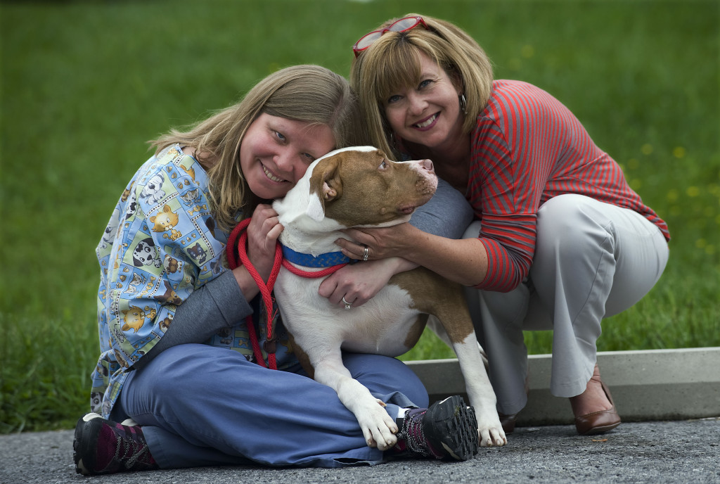 Marcy Gallo, left, kennel director of the Warren County Humane Society, and Lavenda Denney, right, executive director, give some attention to Levi, an American pit bull terrier who was surrendered to the shelter recently.   Rich Cooley/Daily
