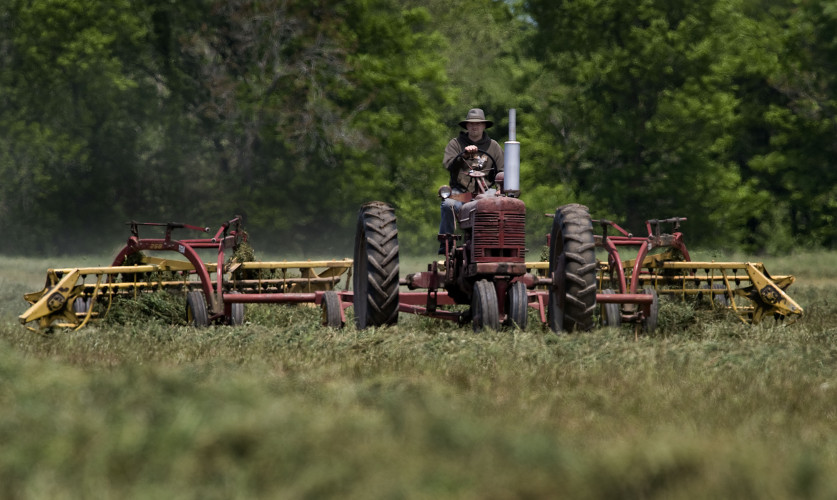 William Beckenstrater rakes an alfalfa field at Mt. Airy Farm south of Mount Jackson on Monday.  Rich Cooley/Daily