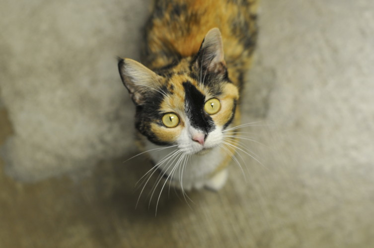 Angelina is looking for a good home. Jake Zuckerman/Daily