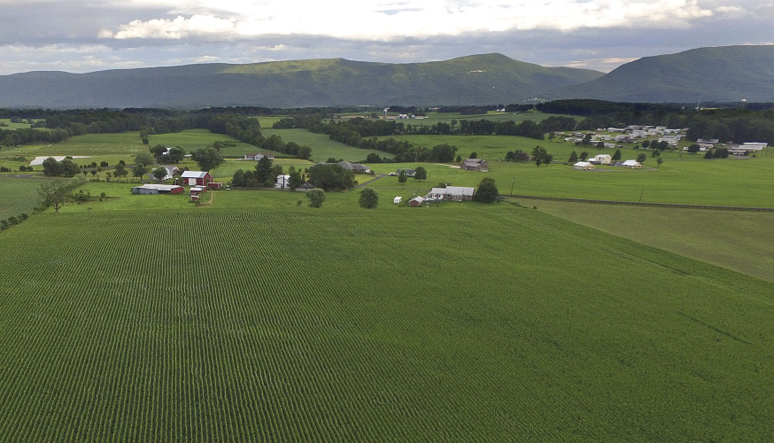 Drone footage shows a cornfield west of Mount Jackson.   Courtesy photo