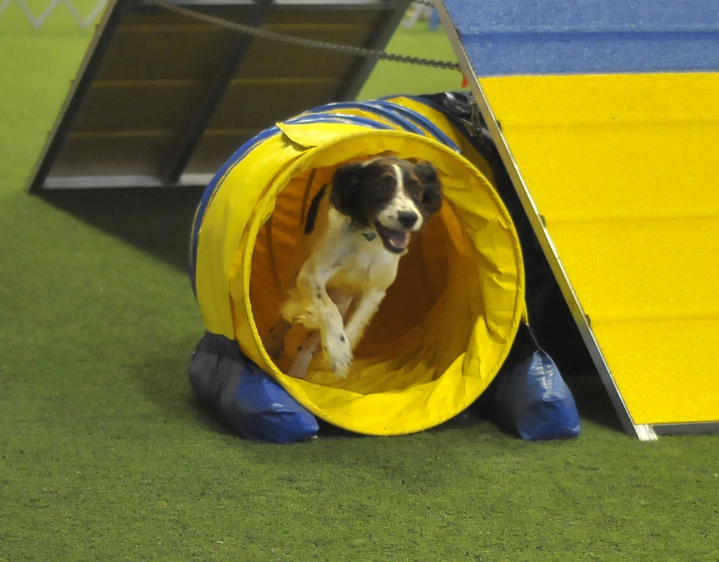 Winchester hosts dog agility trials | News, Sports, Jobs - The ...