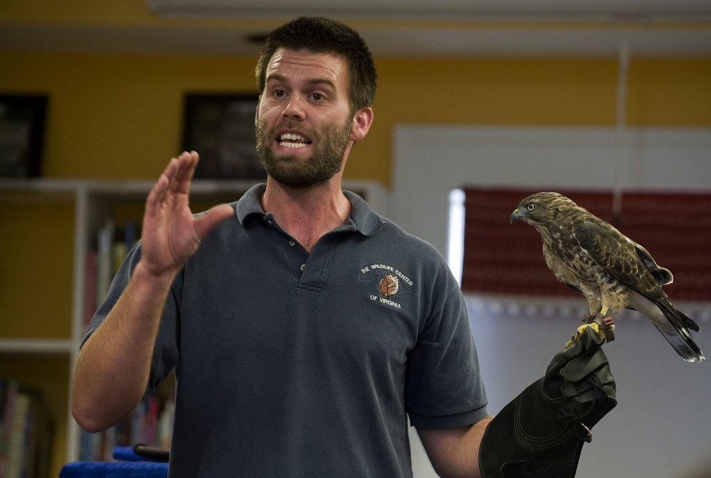 Alex Wehrung, an outreach coordinator for the Wildlife Center of Virginia, shows off a broad-winged hawk named Grayson to children inside Strasburg Community Library on Wednesday. Rich Cooley/Daily
