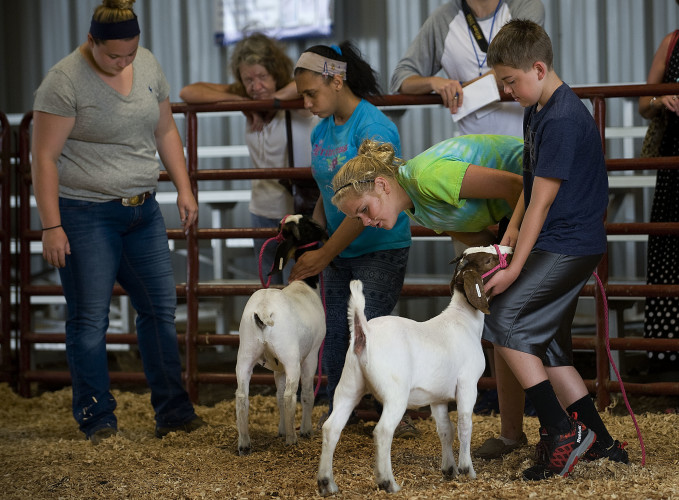 Emily Bucklew, left, 19, and Hannah Davis, second from right, 15, coach Jazzmin Garcia, 15,  second from left, and Camden Drago, 9, as the children place their goats in the show ring during the Bright Stars Goat Show for special needs children Thursday morning at the Frederick County Fair. Rich Cooley/Daily