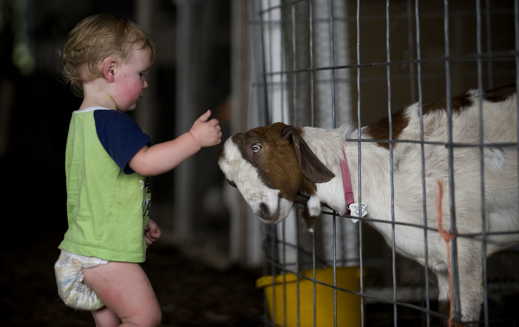 Jeffrey Tlavchan, age 1, of Front Royal, plays with Nuisance, a goat owned by Pat Hough, of Front Royal.  The pair were playing together Monday afternoon in the livestock and poultry barn at the Warren County Fair. The fair continues through Saturday. Tonight's events feature the Power Wheel Demo Derby.  Rich Cooley/Daily