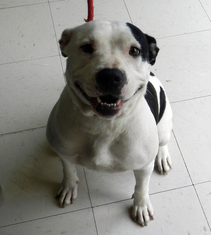 2-year-old Penny is looking for a home. Kaley Toy/Daily