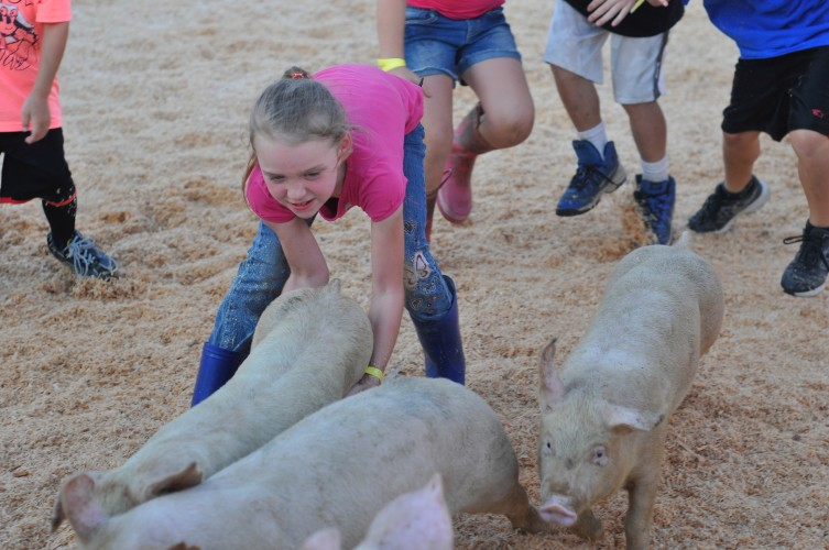 A participant in Friday's Shenandoah County Fair Pig Scramble struggles to find a good hold on the legs of a pig.  Jake Zuckerman/Daily