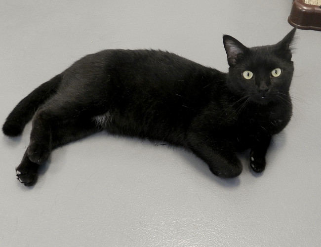 Samuel can be adopted at the Winchester SPCA.  Kaley Toy/Daily