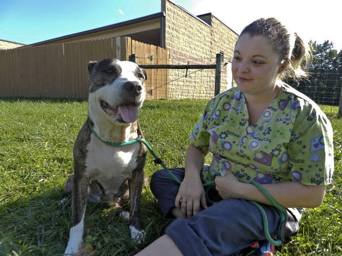 Shy, an 8-year-old pit bull mix, enjoys some outdoor time with animal caretaker Kayla Wines at the Humane Society of Warren County. Rachel Mahoney/Daily