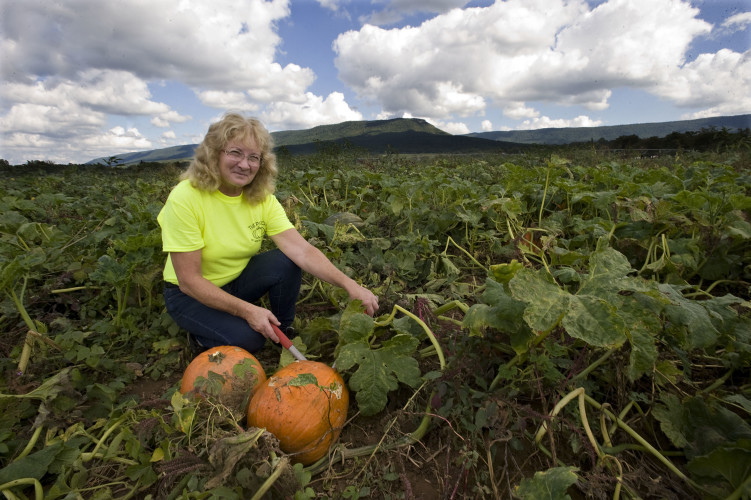 Anita Andrick, co-owner of Mt. Airy Farm in Mount  Jackson, checks out some  pumpkins in a 4-acre pumpkin patch on the farm off U.S. 11 south of town. The Patch, its formal name, is open from 10 a.m. to 6 p.m. seven days a week until Oct. 31, or until they run out of pumpkins.  Rich Cooley/Daily