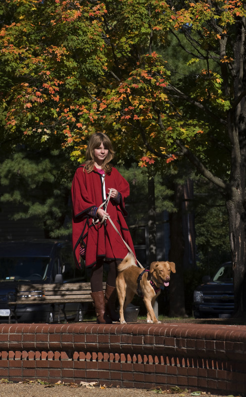 Eleanore Davis, 10, of Linden, and her dog Joy walk along a wall near the gazebo on East Main Street in Front Royal as maple trees start to shed their colors. Rich Cooley/Daily