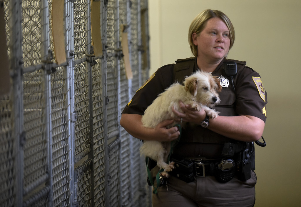 Sgt. E.E. Brogan, a Shenandoah County Sheriff's Office animal control, holds Harriette, a mixed terrier,  inside the county animal shelter in Edinburg. Harriette was picked up as a stray in the New Market area recently. Brogan's job has her dealing with many pets and animals that are fostered or relocated after their owners are charged and tried for abuse and neglect. Rich Cooley/Daily