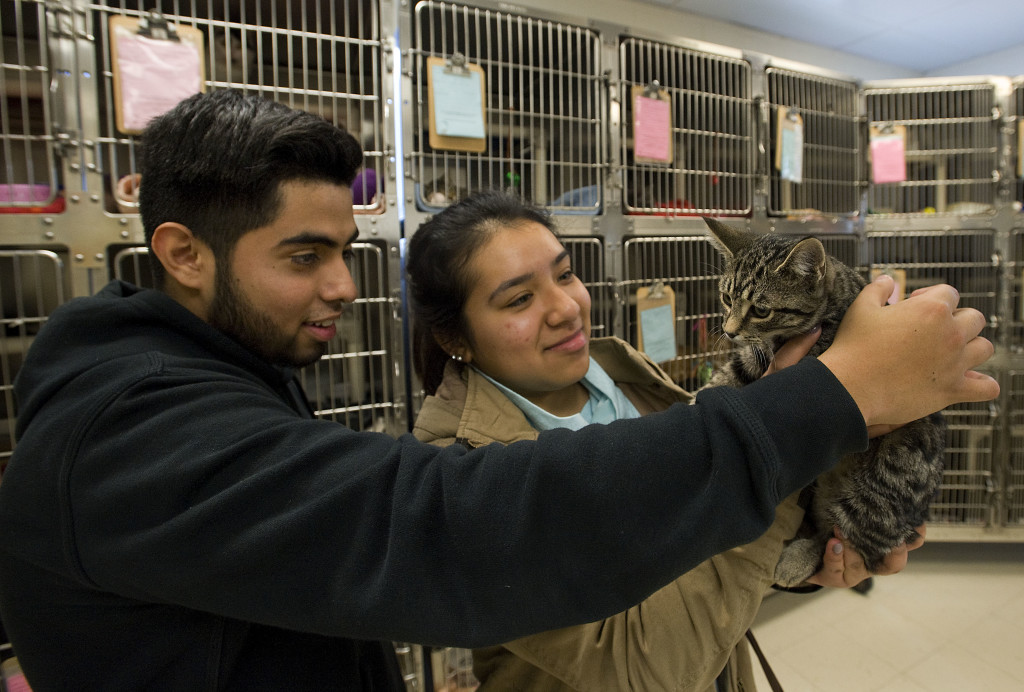 Luis Correa, 18, left, and Alejanbra Talledos, 17, both of Stephens City, entertain a cat named August that is available for adoption at the Humane Society of Warren County. The couple were looking at animals for adoption on Monday, which was the last day of a fee-waived adoptions event.  Rich Cooley/Daily