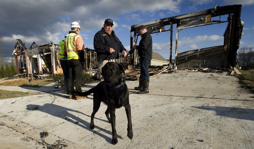 Mark Showers, assistant fire marshal and accelerant canine handler for Frederick County, holds his dog Walker outside a fire scene on Trumpet Vine Drive in Stephens City on Thursday afternoon. A fire Wednesday night started in the house under construction on the right,  destroying that home and the occupied house on the left. A house located in the rear of these homes suffered siding damage from the heat of the blaze. Rich Cooley/Daily
