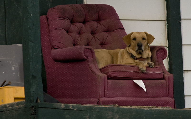 A dog has comfortable seat as he watches the property from his recliner along Gafia Lodge Road in Middletown on Friday. Rich Cooley/Daily