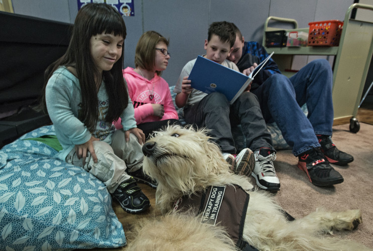 Quintana Varela, 14, of Woodstock, gives Duke, a labradoodle  school therapy dog,  some attention as her classmates read a story about Duke in their classroom at Peter Muhlenberg Middle School. Rich Cooley/Daily