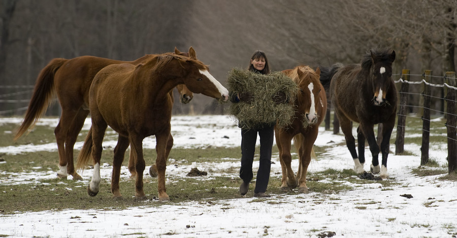Linda Bertschinger, of Edinburg, puts out hay for her horses along this snowy patch of pasture at Classicus Farm on Friday.  Rich Cooley/Daily