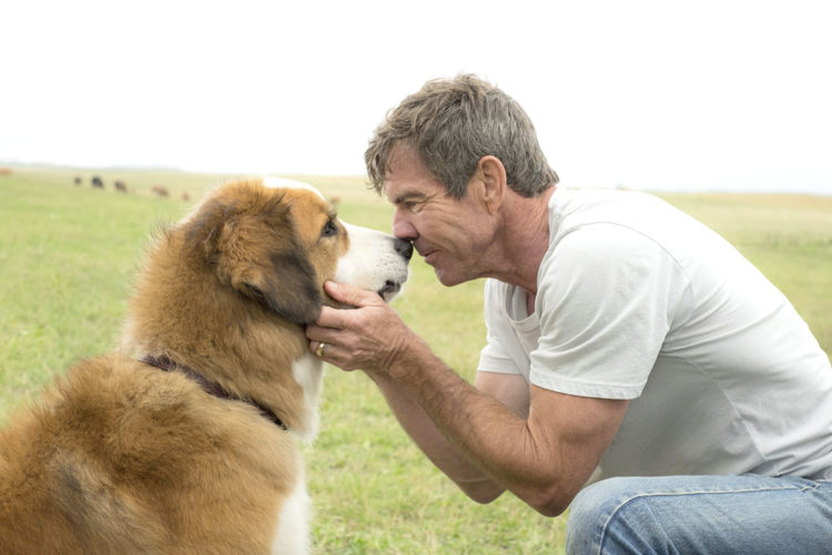 "Submitted Photo ""A Dog's Purpose"" will be shown Saturday and Tuesday nights at the Opera House. Attendees who bring a donation for the Lake Shore Humane Society can win a boxed set of books."