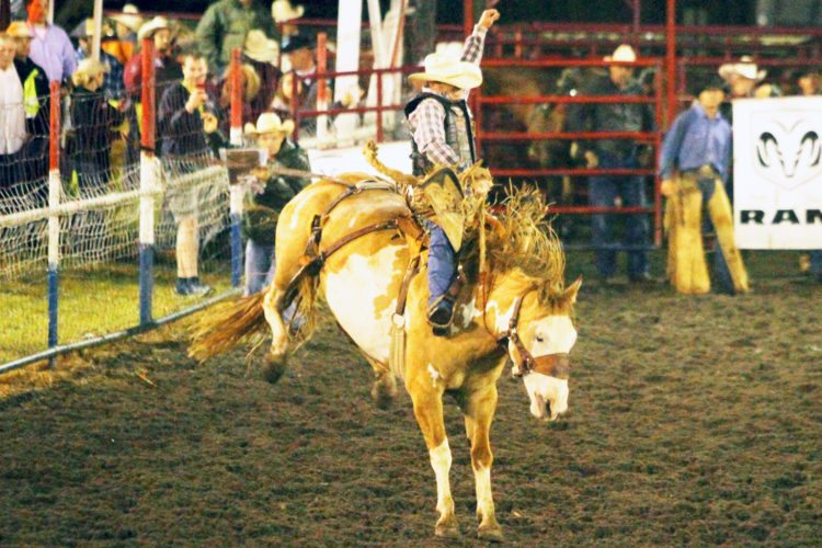 OBSERVER Photo by Lisa Monacelli Joey Sonnier III of New Iberia, La. earns a score of 76.5 in the Saddlebronc Riding competition.