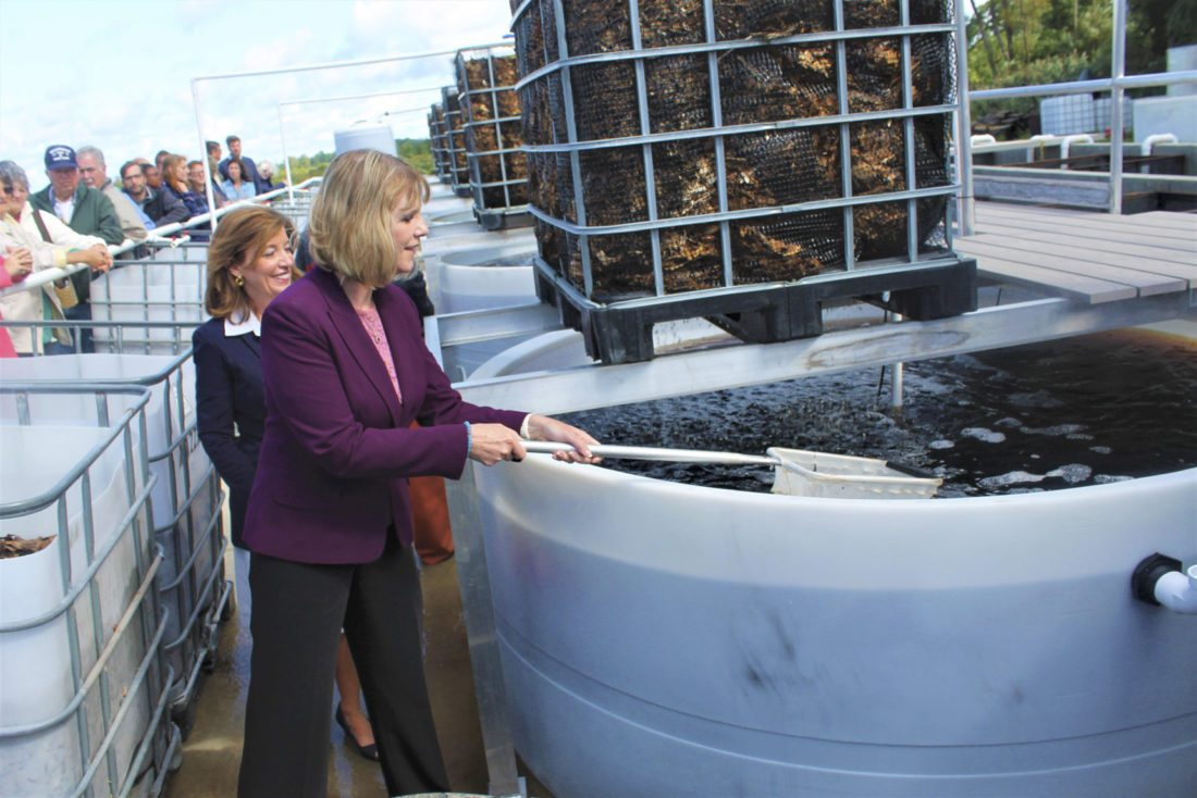 State Sen. Cathy Young, right, dumps fish into the sustainable fish farm Friday as Lt. Gov. Kathy Hochul looks on. The two were among several governmental dignitaries that came to Westfield Friday to witness a one-of-a-kind, high-tech fish production facility.