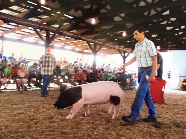 Jacob Lesch shows a prize pig at the Chautauqua County Fair in July.