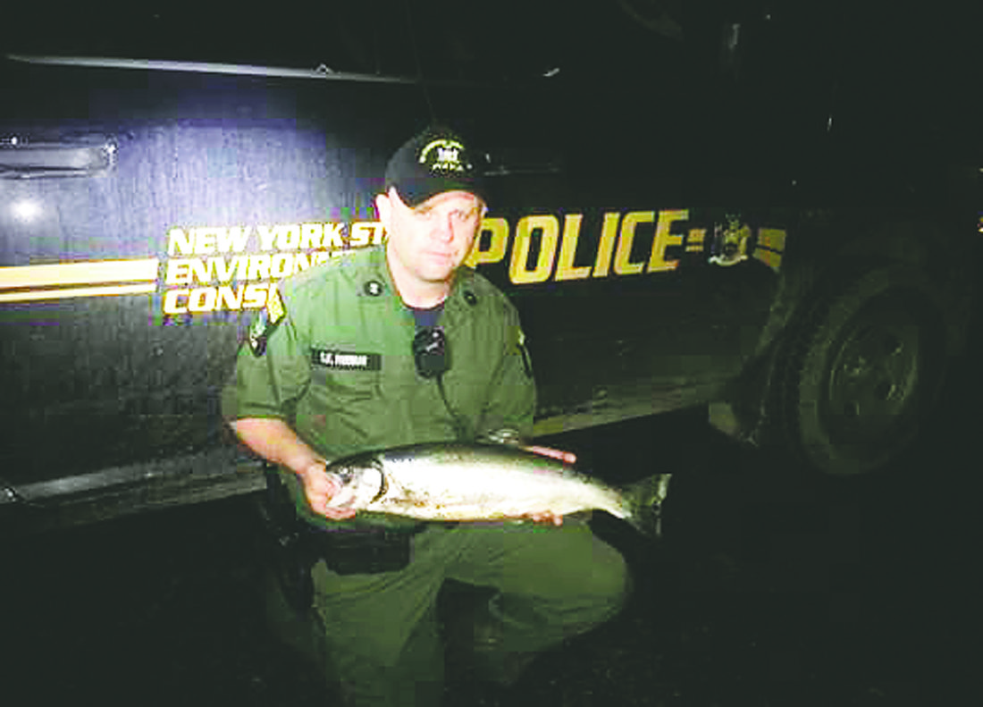 Submitted Photo A conservation officer displays a steelhead which was caught along the bank of Canadaway Creek.