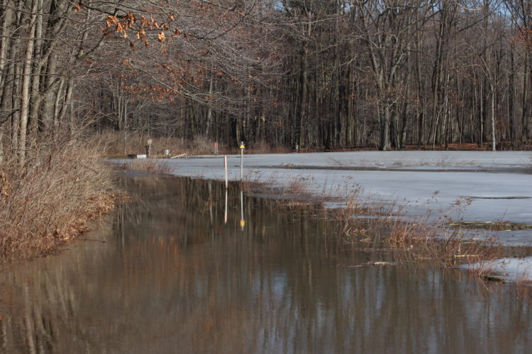 Flooding at the Audubon, and around the area, forced many animals to relocate to higher ground.