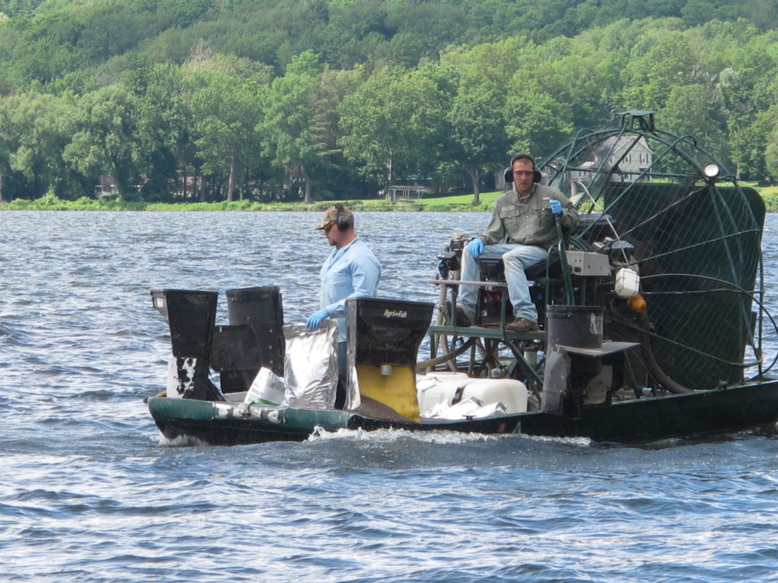 Agents of SOLitude Lake Management apply Navigate, a granular herbicide to one of the three DEC approved zones in Bemus Bay on Monday. P-J photo by Remington Whitcomb