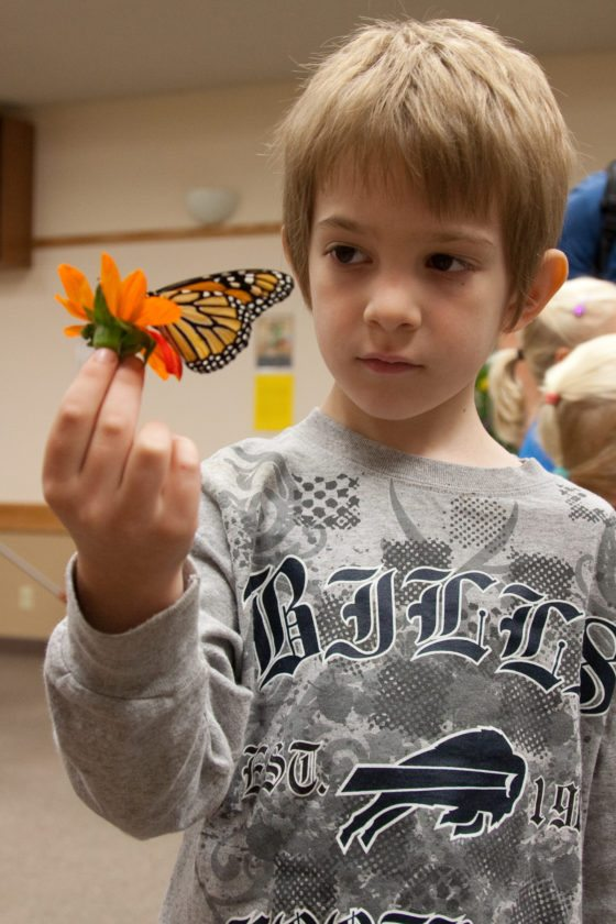 A boy is pictured experiencing a monarch up close at a previous Monarch Festival.  Submitted photo