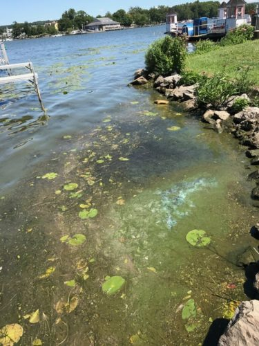 Aquatic plants and algae provide many benefits for a healthy ecosystem, but they can also be problematic for lake users and residents. Photo by Jennifer Phillips Russo