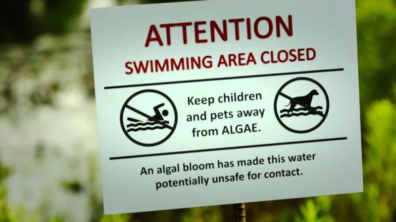 Substantial nutrient reduction must occur to prevent beach closures due to algal blooms.  Photo courtesy of NYSFOLA