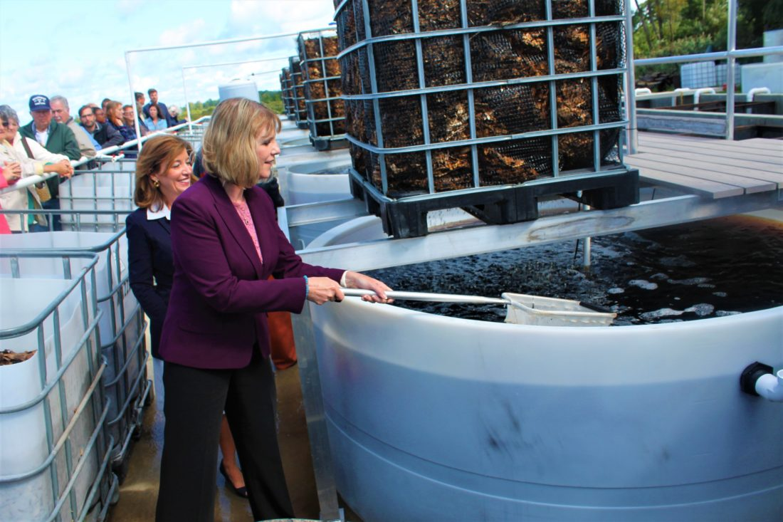 "State Sen. Cathy Young dumps fish into the sustainable fish farm Friday in Westfield. ""I think it's just phenomenal that it's come to this point and I want to thank this company for investing in Westfield,"" Young said. P-J photos by Jordan W. Patterson"