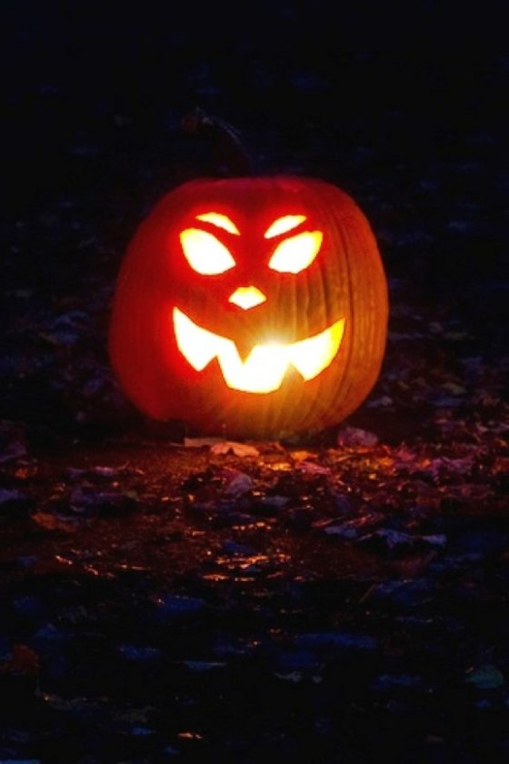 interested area residents could carve a prize winning pumpkin that would decorate the trails for audubon community nature centers enchanted forest