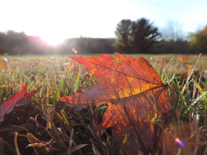 Leaves already fallen.  Photos by Katie Finch