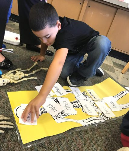 Bush Elementary School first grader, Josue Sanchez, labeled the parts of the skeletal system as part of his Human Body English Language Arts unit.