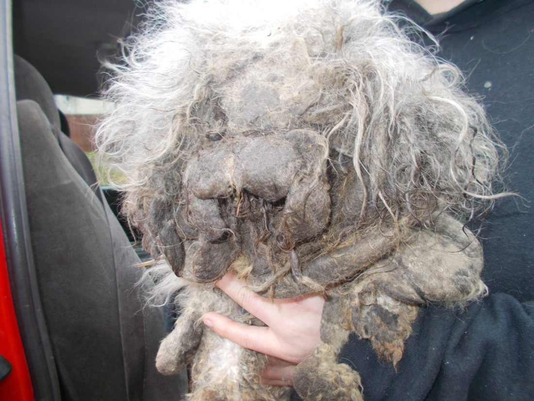 Three Jamestown residents were charged with animal cruelty after a neglected dog was found by firefighters Thursday morning. Crews responded to the Mt. Vernon Place residence after a fire reportedly broke out in a bedroom.  Photo by the Jamestown Police Department