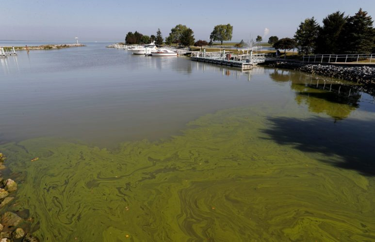 Algae floats in the water at the Maumee Bay State Park marina in Lake Erie in Oregon, Ohio, on Friday, Sept. 15, 2017. Pungent, ugly and often-toxic algae is spreading across U.S. waterways, even as the government spends vast sums of money to help farmers reduce fertilizer runoff that helps cause it. (AP Photo/Paul Sancya)