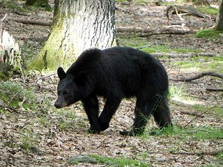 """Bears"" is the theme for Audubon Community Nature Center's Little Explorers on Saturday, Dec. 9. Through artifacts, stories and a walk outside, children between the ages of 3 and 8 and their favorite grownups will learn about bears."