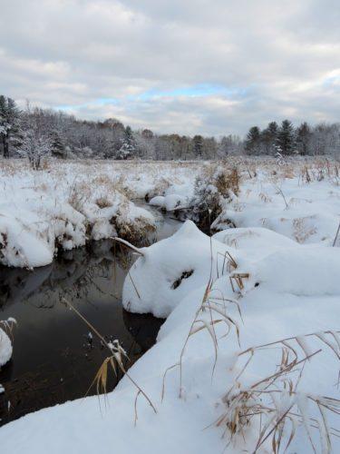 A blanket of snow across Spatterdock Pond at Audubon.