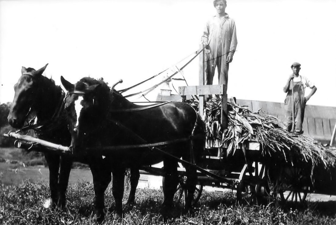 Ben standing with rake, a farmhand, possibly one of his brothers, driving the horses. Johnson photo archives. Circa 1922.