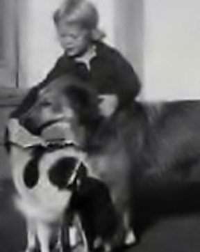 Sandy with dogs, circa 1955
