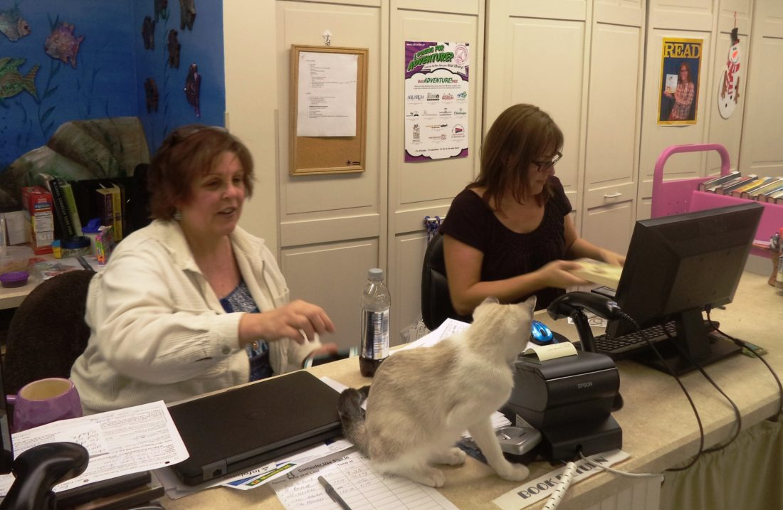 """Library volunteer Jane Jones, left, and library director Melissa Froah greet visitors at the Findley Lake Community Library. Also pictured is Abba the cat. """"Take Your Child to the Library""""is being held today."""