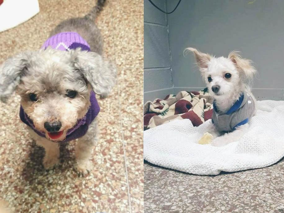 Mia, left, and Milkyway pictured at the Jamestown Veterinarian Hospital after they were rescued from a fire in November.  Submitted photos
