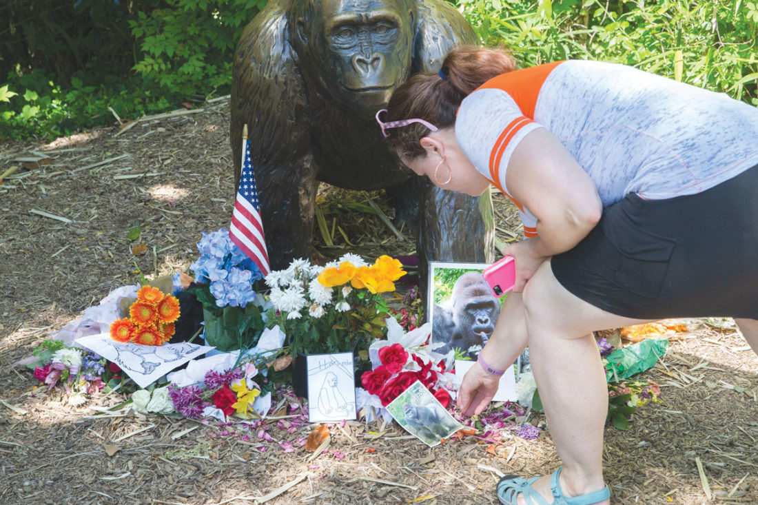 In this  file photo, a visitor touches a picture of Harambe, a male silverback gorilla, at a makeshift memorial outside the Gorilla World exhibit at the Cincinnati Zoo & Botanical Garden in Cincinnati. (AP Photo/John Minchillo, File)