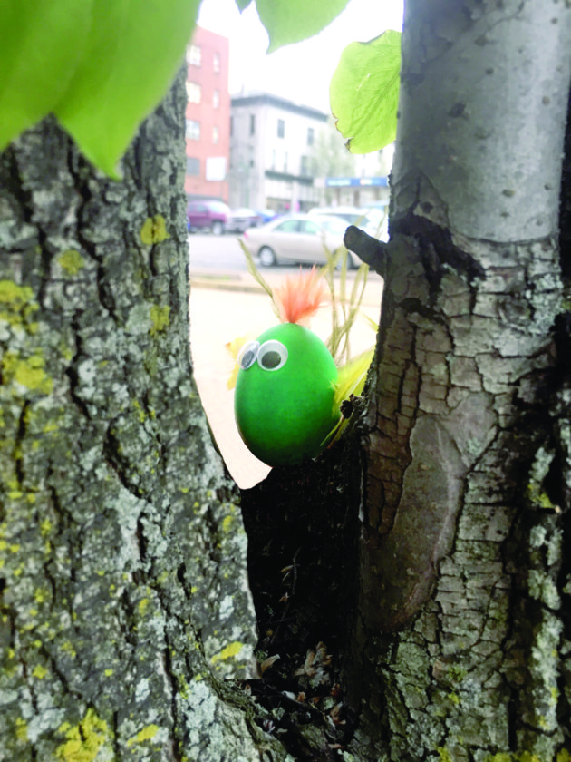 A 'Common Greenbody.' (Photo courtesy of Phil Wellington)