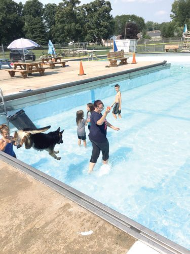 Loki, a 3-year-old German shepherd, leaps into the pool after a ball being tossed by his owner, Stephanie Myers, Monday during the Drool in the Pool event. (Photo by Katie White)