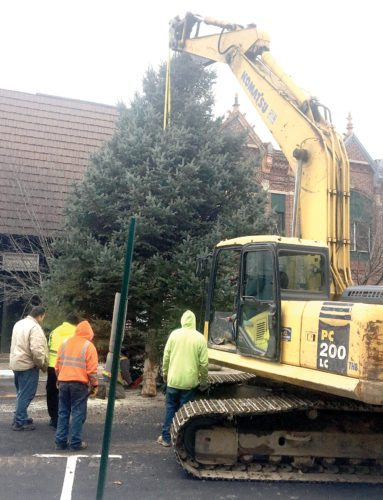 This large Blue Spruce was held steady Wednesday along Market Street in downtown East Liverpool as members of Pusateri Excavating trimmed up the trunk in preparation for its temporary placement on the Diamond as part of the city's Christmas parade and tree-lighting ceremony on Dec. 2. First Class Towing blocked off access to Market Street while the tree was trimmed. (Photo by Steve Rappach)
