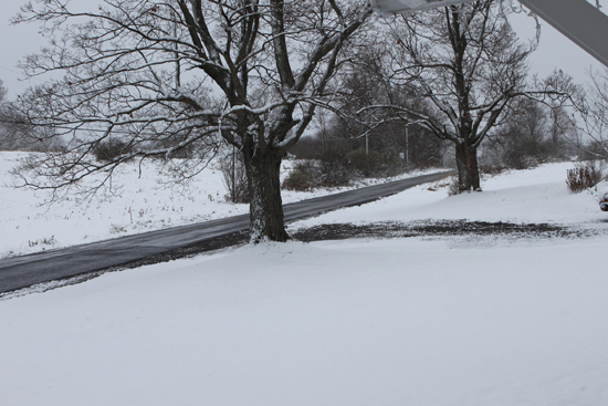 CHERYL R. CLARK/Sun-Gazette A blanket of snow covers the ground in rural Tioga County on Sunday.