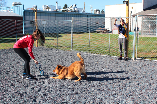 MEGAN E. BLOOM/Sun-Gazette Williamsport Area Middle School eighth graders filmed six dogs at the Lycoming County SPCA to help get them adopted. The students used iPads to create the footage and depict each dog's personality. Shown: Jessica Robinson, 13, and Oam Patel, 13, playing fetch with Leo.  The students learned about persuasive techniques in the class and are going beyond the walls of the school to practice what they were taught. They hope to get all of the dogs adopted once the commercial goes online. Shown: left, Gavin Turner, 13; center, Tyler Fausnaught, 14; and right, Robyn Hannan, eighth grade language arts teacher, with the dog, Daisy.